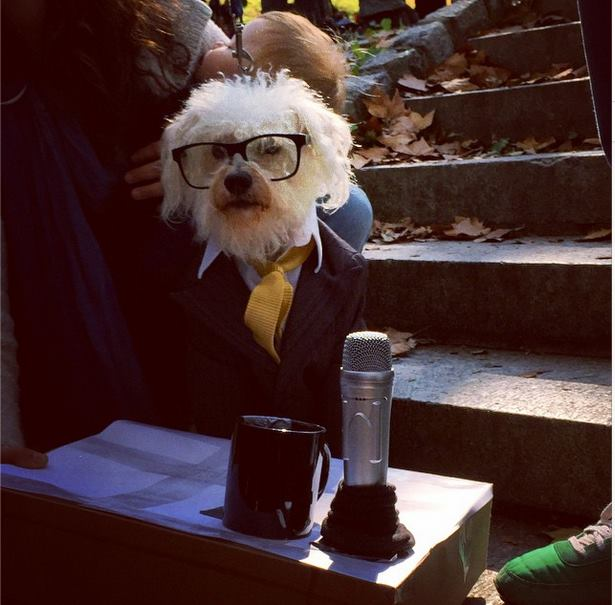 Ira Glass Dog Halloween Costume via Instagram